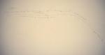 Wall Text 1 by David Festa