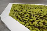 Tutti Frutti (Peggy Phelps Gallery detail)