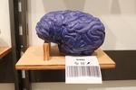 Brain Store