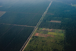 Palm Oil Plantations on peninsula Malaysia