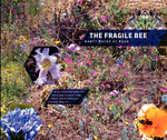 The Fragile Bee: Nancy Macko at MOAH by Kathleen Stewart Howe, Carole Ann Klonarides, Stephen Nowlin, and Nancy Macko